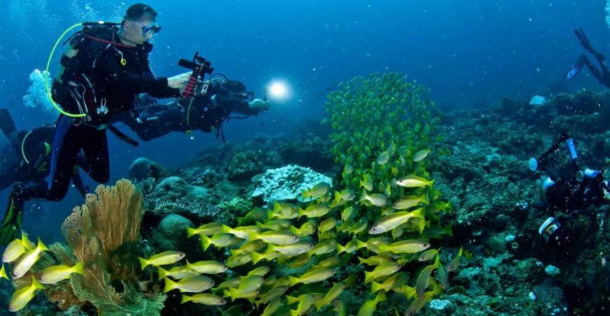 Cosa serve per fare immersioni subacquee: consigli pratici per non sbagliare